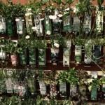 Pflanzen auf eine ganzheitliche Weise begreifen.