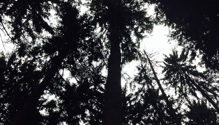 Hugging_Tree