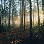Buchvorstellung: Im Wald sein.